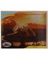 Bouwpakket hout Pteranodon