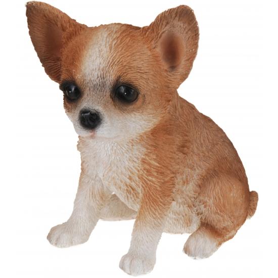 Chihuahua honden beeldje voor binnen 17 cm